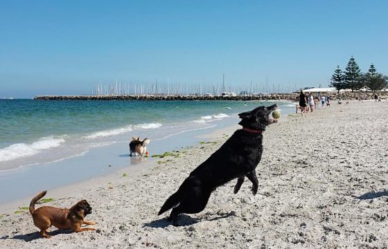 dog_beach_02_screen_res-web