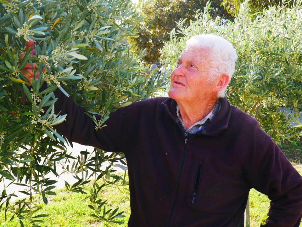 Bill and his olive tree
