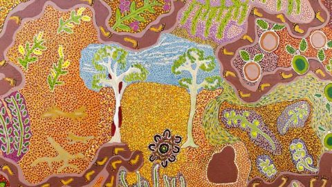 The art of healing: five medicinal plants used by Aboriginal Australians