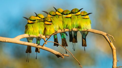 BirdLife Photography Conference