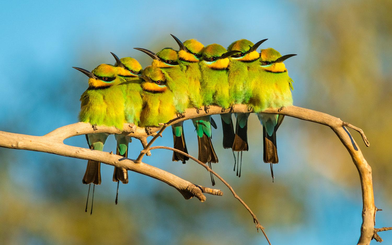 a+family+affair+-+bird+portraits (1)