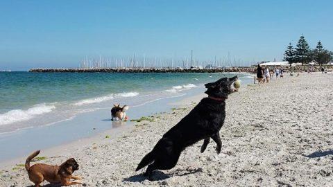 Dog Exercises – Or Human Exercises With Dog