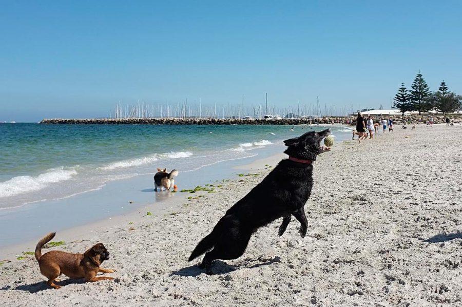 dog_beach_02_screen_res-web-900x598