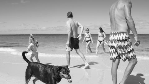 """Life's a Dog Beach"" – Photographic Exhibition by Neil Wallace"
