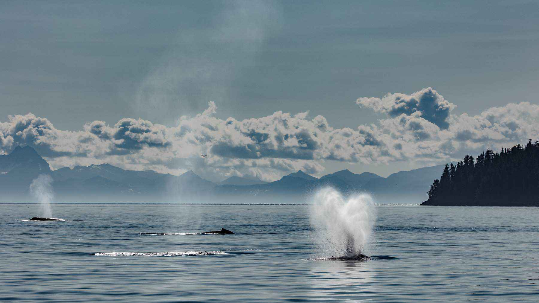 looking-for-whales-wade-robyn-hughes01