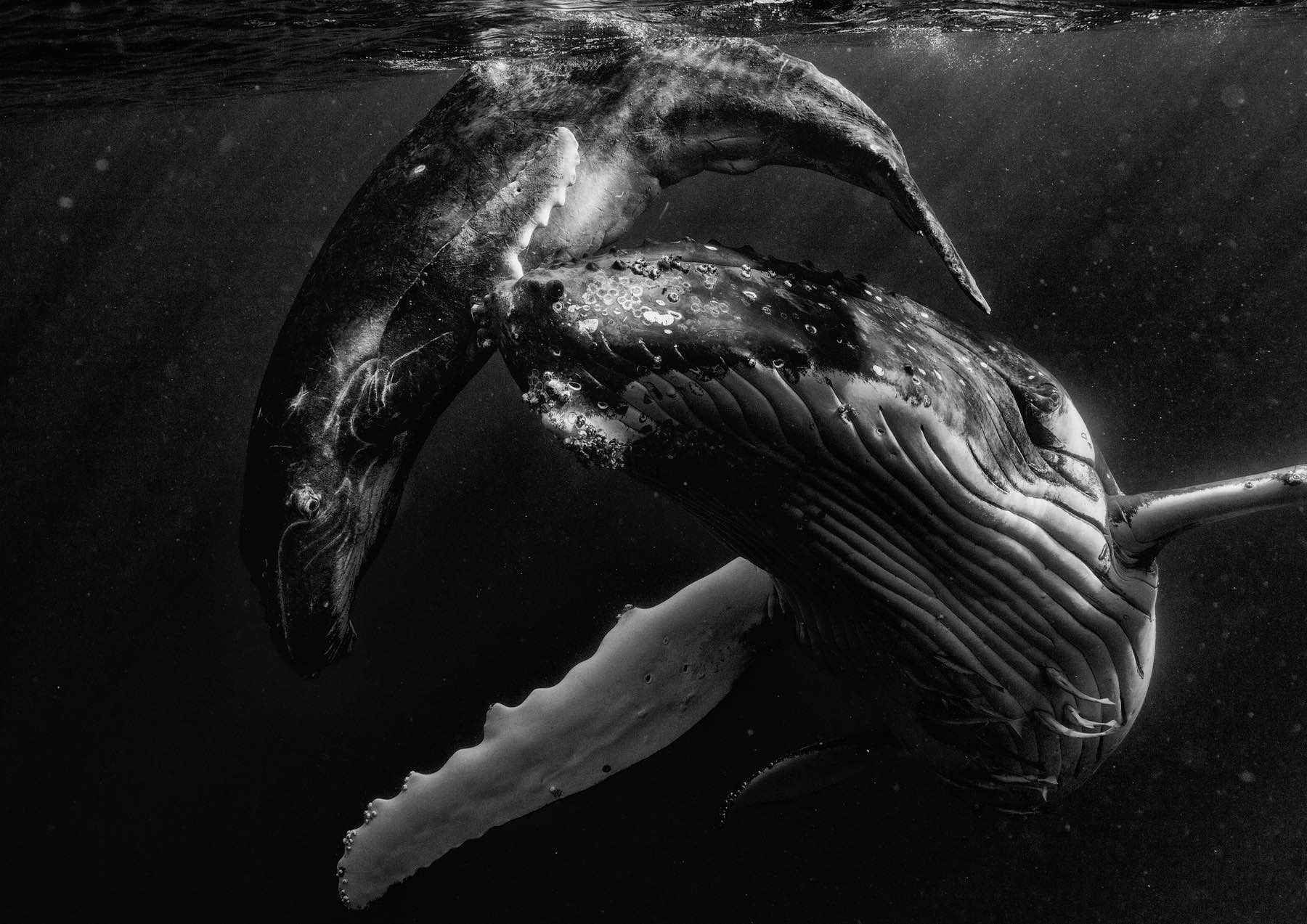looking-for-whales-wade-robyn-hughes02