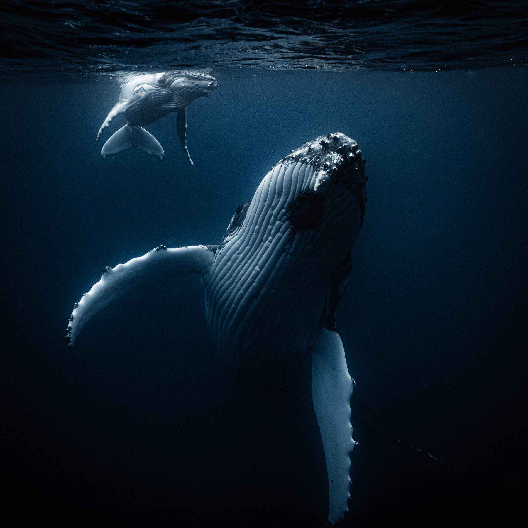 looking-for-whales-wade-robyn-hughes04