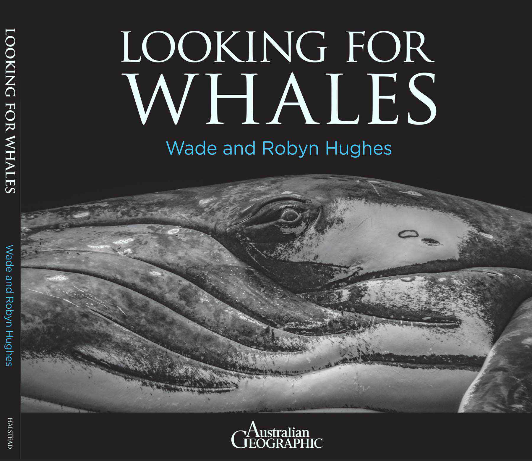 looking-for-whales-wade-robyn-hughes07