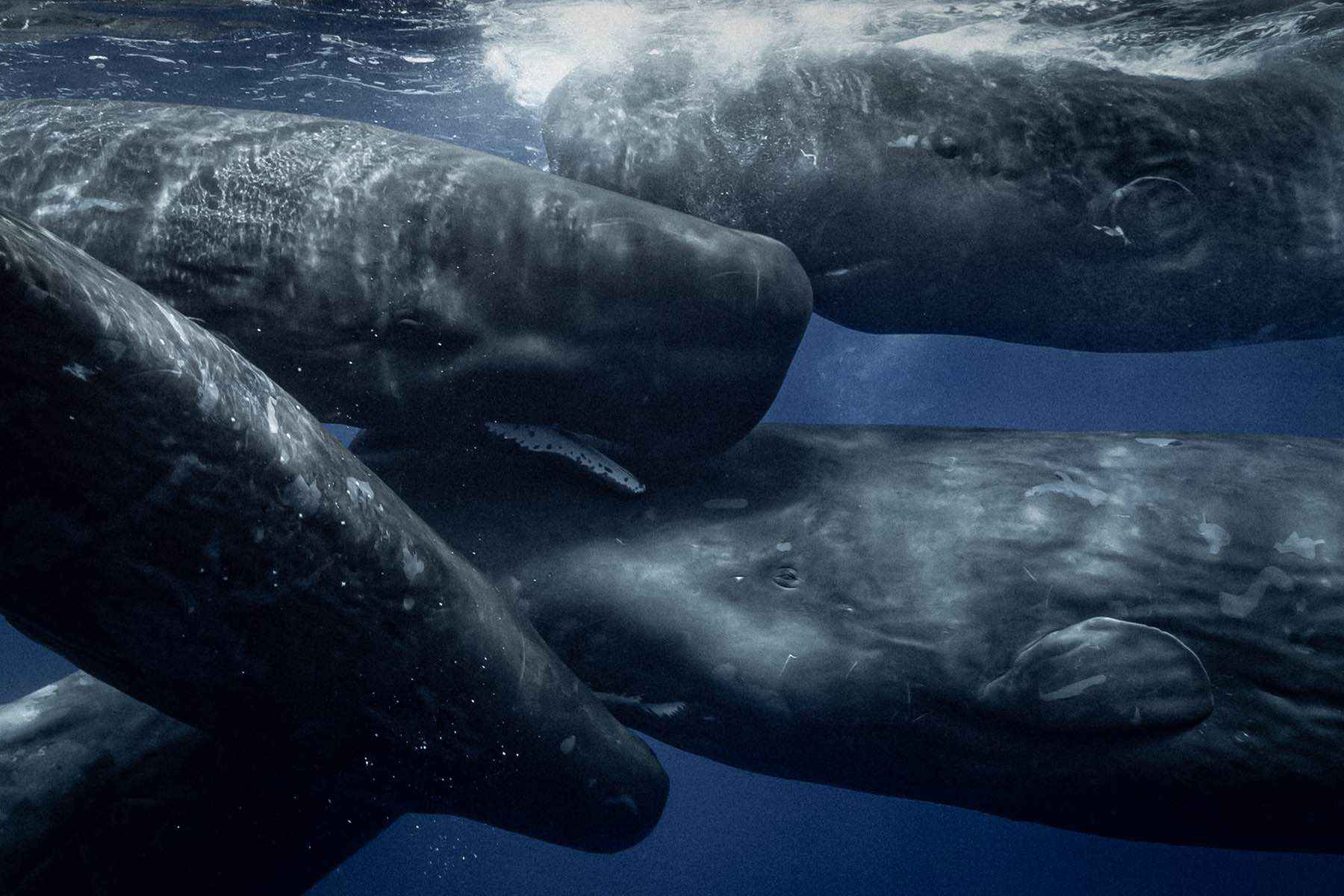 looking-for-whales-wade-robyn-hughes09