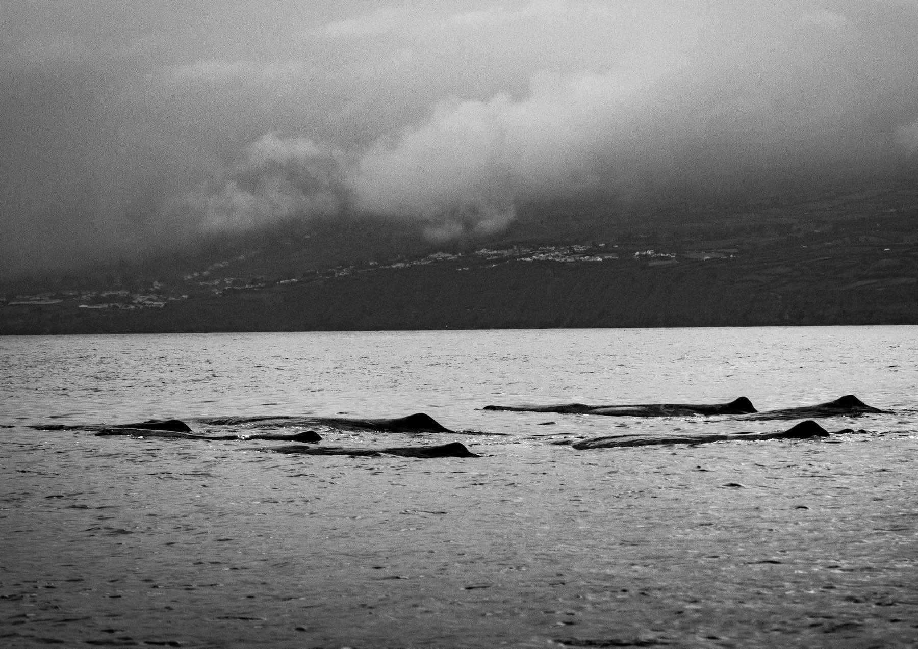 looking-for-whales-wade-robyn-hughes10