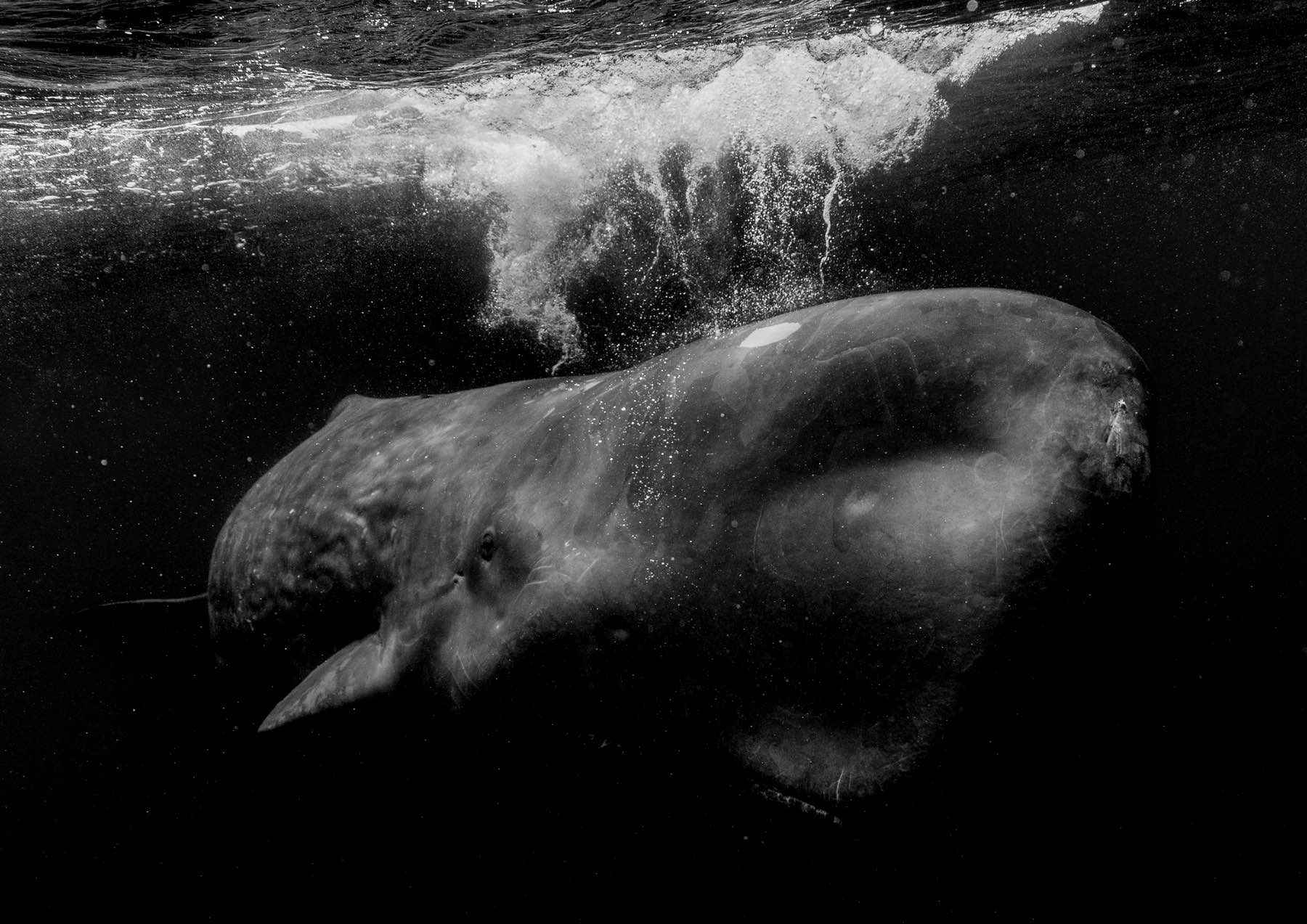 looking-for-whales-wade-robyn-hughes11