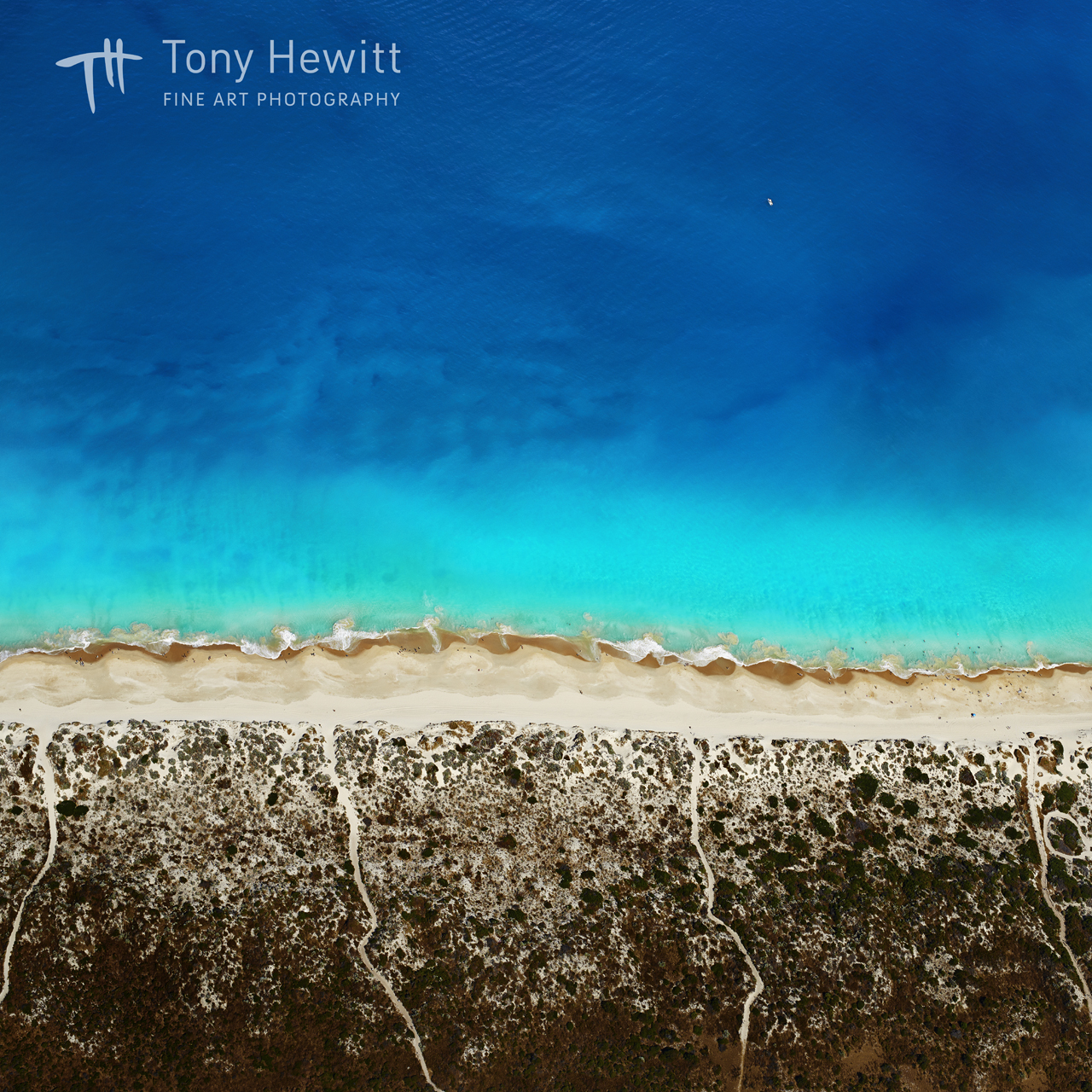 THEWITT©BRIGHTON BLUE