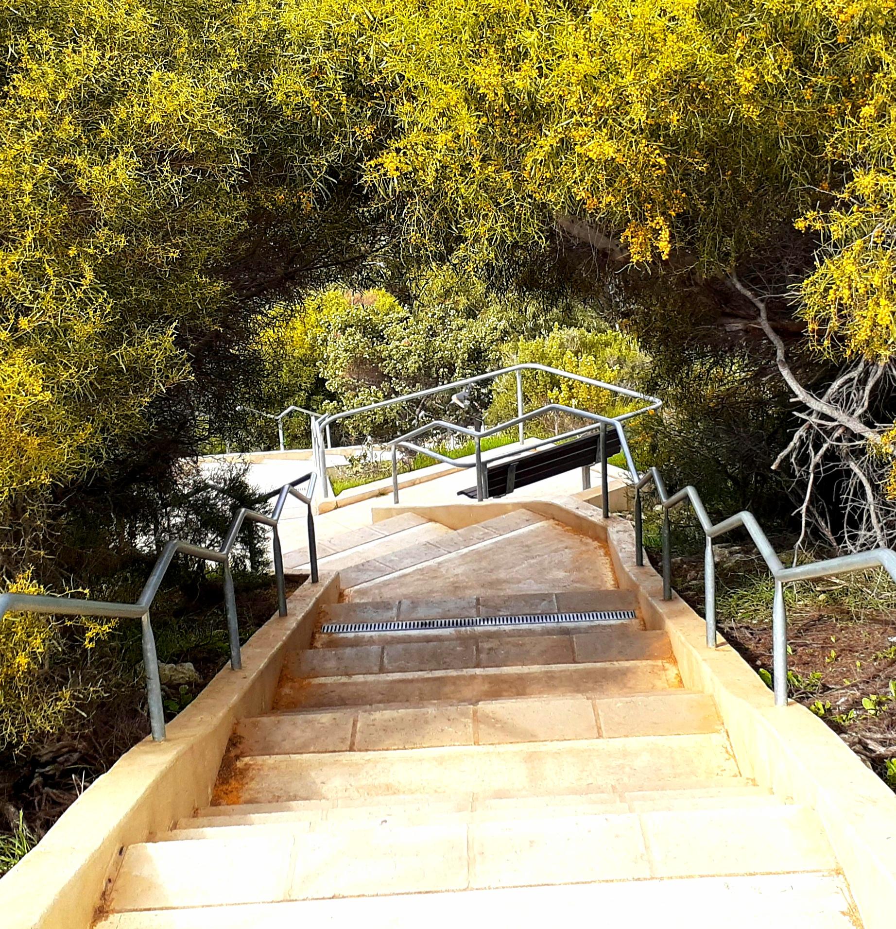 Stairs_Acacias