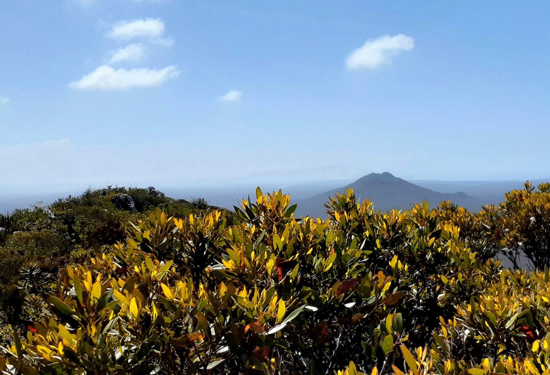 View West Mt Barren